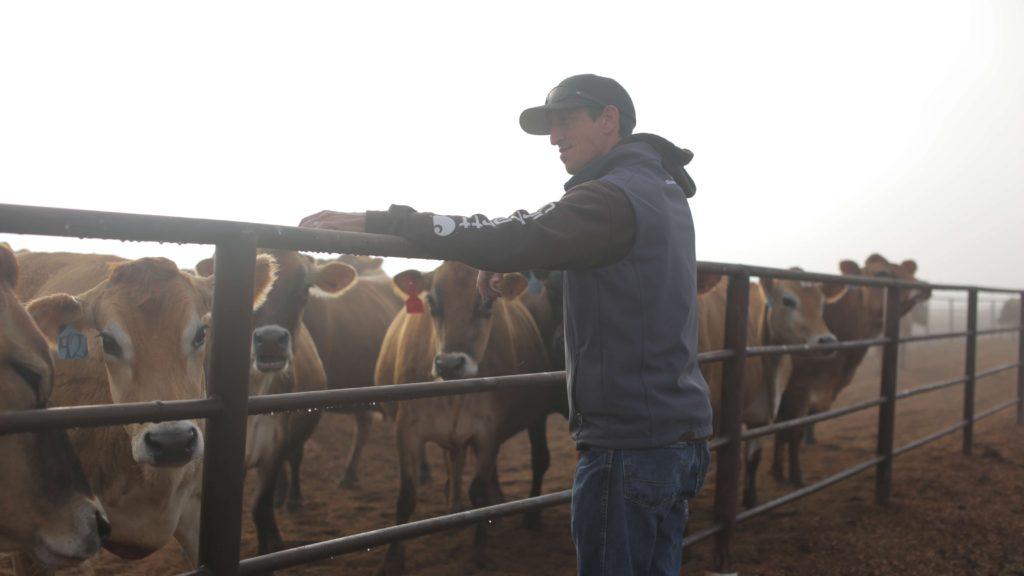 Scott and Cattles